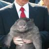Брюс Ли нервно «отдыхает» — Путин получил 8-й дан по карате!
