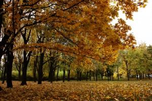 Осень_Украина