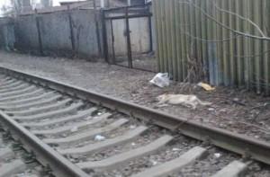 Волонтеры обнаружили десятки мертвых собак. Фото: Angelina Yar
